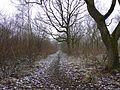 Stoke Wood Woodland Trust 4.jpg
