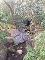 Stream in Ryoanji Temple 2.jpg