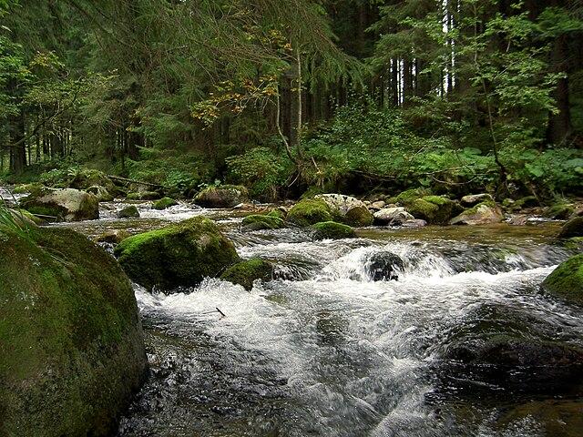 Studený potok - sladkovodný ekosystém s tečúcou vodou