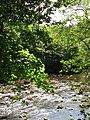 Sunlight on the River Allen - geograph.org.uk - 850564.jpg