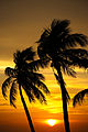 Sunset on Smathers Beach, Key West - Flickr - Joe Parks.jpg