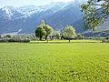 Suru Valley - Kargil (LADAKH).jpg