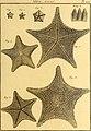 Tableau encyclopédique et méthodique des trois règnes de la nature (1791) (14745093306).jpg