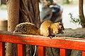 Tainan Taiwan Squirrel-in-Confucius-Temple-Park-01.jpg