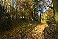 Tapis de feuilles dans l'un des bois (22937092511).jpg