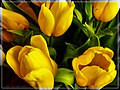 Tere^^39,s Tulips - Flickr - pinemikey.jpg