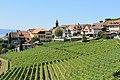 Terrasses de Lavaux - panoramio (32).jpg