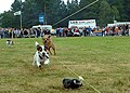 Terrier Races at Moy Games - geograph.org.uk - 1803.jpg