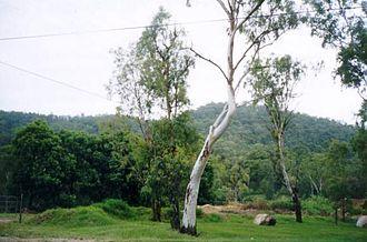 Taylor Range - Enoggera Hill, seen from The Gap
