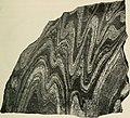 The American Museum journal (c1900-(1918)) (18133027776).jpg