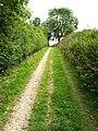 The Bridleway to Weedley Springs - geograph.org.uk - 926564.jpg
