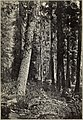 The Crater National Forest - its resources and their conservation (1911) (20682925026).jpg