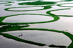 Image result for loktak lake