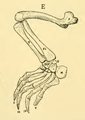The Osteology of the Reptiles-206 fghg fgh fgh g fgh dh fgh rt.png