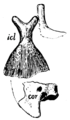 The Osteology of the Reptiles p131 Fig-105.png