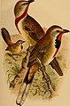 The birds of Africa, comprising all the species which occur in the Ethiopian region (1896) (14569231567).jpg