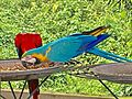 The blue and yellow bird.jpg