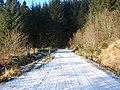 The entrance to Hafren Forest at Panty-yr-esgair - geograph.org.uk - 1113022.jpg