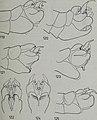 Tijdschrift voor entomologie (1984) (14779306651).jpg