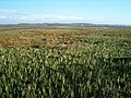 Towards Loch Indaal - geograph.org.uk - 164620.jpg