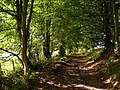 Track through the woodland at the foot of Great Mell Fell - geograph.org.uk - 1517246.jpg