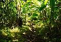 Trail to Aihualama Falls (5170648265).jpg