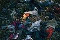 Trash near the Arroyo Seco river, East Los Angeles, Los Angeles California 10.jpg
