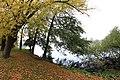 Tree Wave (4037214937).jpg