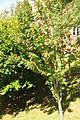 Tree in Radford Woods (5012).jpg