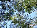 Tree of Big Island.JPG