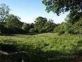 Trees and a meadow in Spye Park - geograph.org.uk - 1342247.jpg