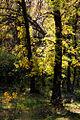 Trees in Volgograd Oblast.jpg