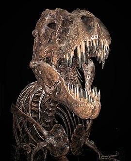 Fosilia skeleto de tiranosaŭro ĉeNacia Muzeo de Naturhistorio en Vaŝingtono