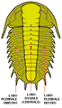 Trilobite 3lobes IT.png