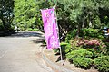 Tsuruma Park Hanashobu Flag 20170527.jpg