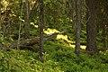Tuggensele urskog-2012-06-23.jpg
