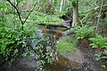 Tullviksbäckens naturreservat stream.jpg