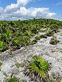 Tulum Archaeological Site - Quintana Roo - Mexico - 03 (15122870243) (2).jpg