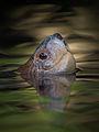 Turtle's Head.jpg