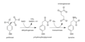 Tyrosine biosynthese.png