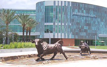 USF Marshall Center Running of the Bulls.JPG