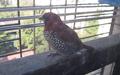 Unknown Bird -10.png