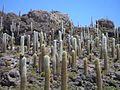 Uyuni, Bolivia - panoramio (7).jpg