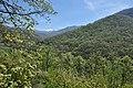 Valle del Jerte 21.jpg