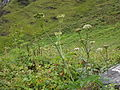 Valley of flowers National Park 13.JPG