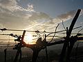 Večerno sonce - Evening sun (6246891863).jpg