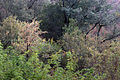 Victoria Falls 2012 05 24 1268 (7421892712).jpg