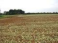 View across fields - geograph.org.uk - 1004449.jpg