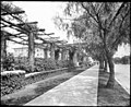 View along the pergola of Hotel Maryland on East Colorado Boulevard, between Los Robles and Euclid Avenue, Pasadena, ca.1910 (CHS-5373).jpg