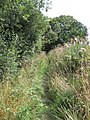 View of Bridleway - geograph.org.uk - 1433584.jpg